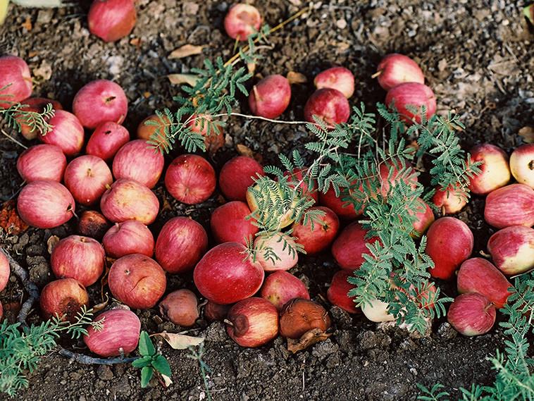 Frutos de Otoño Rapún